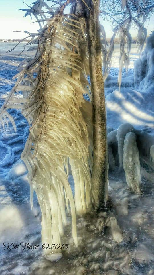 Iowa Ice - A damaged tree after wind blew lake water into backyards and then froze. You can see how hard the wind was blowing because the icicles branch sideways instead of down. NW Iowa, photo taken yesterday.