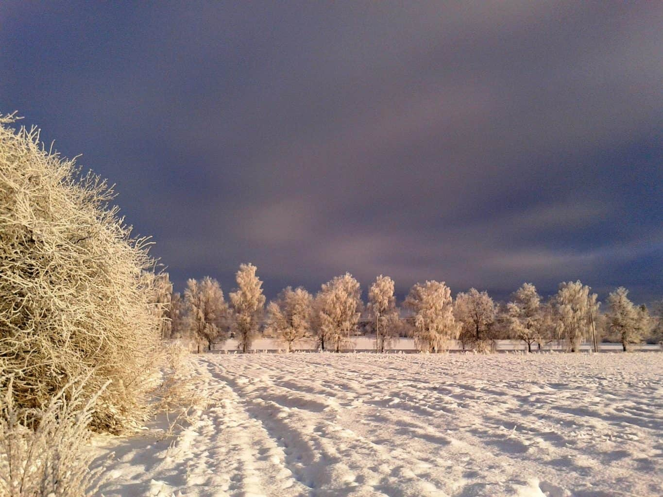 Today's weather in Latvia: Cold with beautiful hard rime and snow in trees What a beautiful day