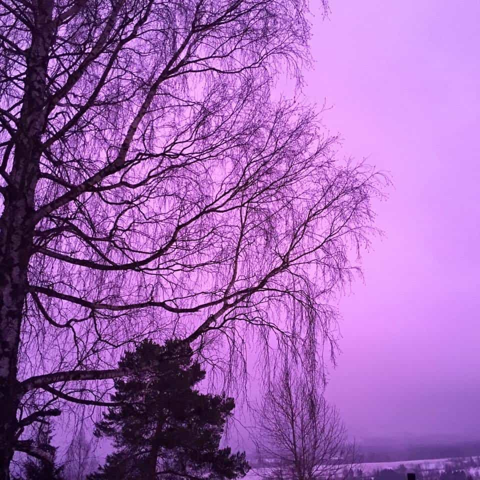 Beautiful purple sky this morning ? Taken with iPhone 6 No filter added. Toten-Norway
