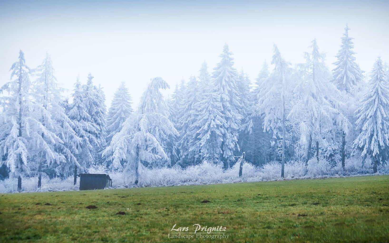 """""""White vs Green"""" Fascinating frost line at Wasserkuppe, Germany"""