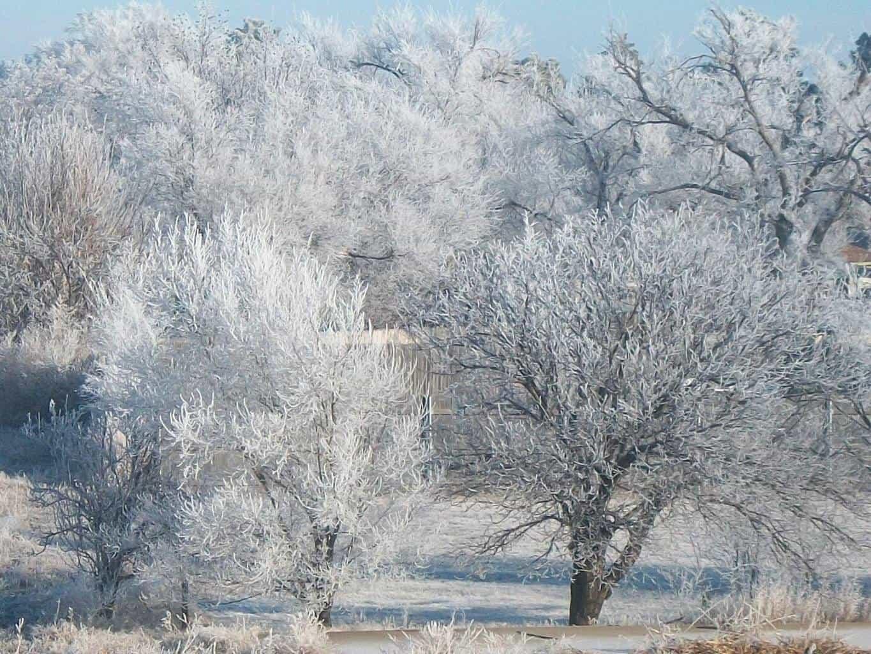 Frosty trees , taken from my balcony in Amarillo, TX. January 11, 2016.