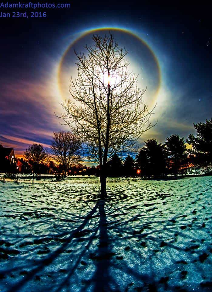Moon Halo, snow cover, sparkles, Balsam Poplar and its shadow. Can't beat that combo from last night!