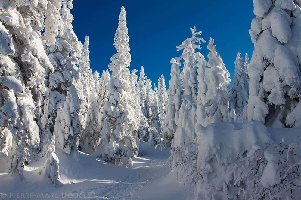 """They call this place """"the ghost valley"""" on the top of Mount Valin in Central Quebec. The ice particules from the cloud at that elevation accumulates on the trees there to give this incredible sight. Pretty good ride to get there, but it really worth it !"""
