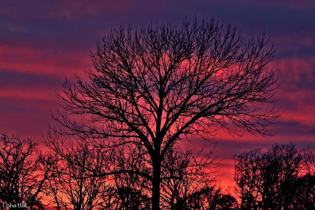 This beautiful sunset was taken outside of my house in Park Hill, Oklahoma on February 11, 2016.