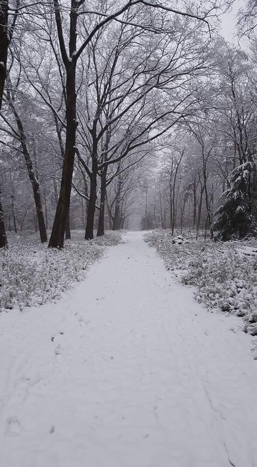 Road to nothing. Some fresh snow got me to the woods where i could enjoy a silent walk. Taken in The Netherlands 14th of Februari 2016