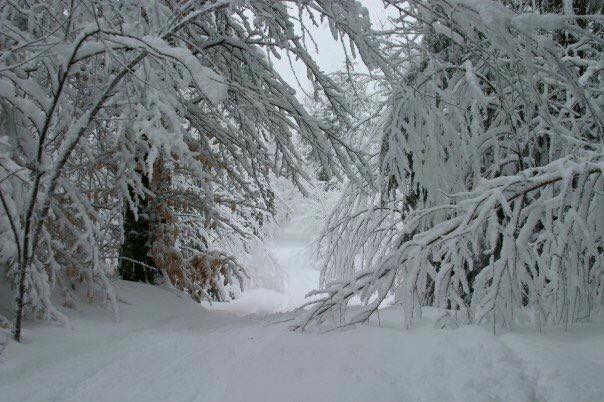 Winter roads in the boonies!! Parry Sound, Ontario, Canada