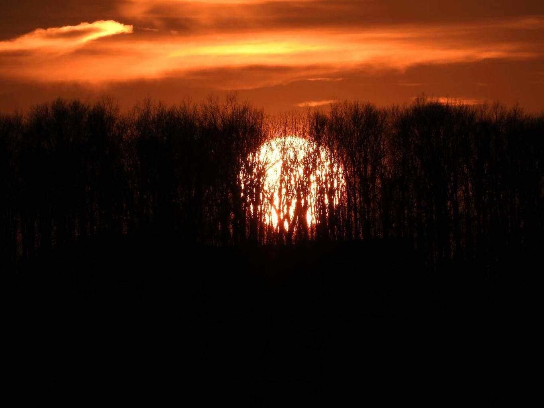 Sun behind the tree's. (Kinda weird looking, but I like it. )