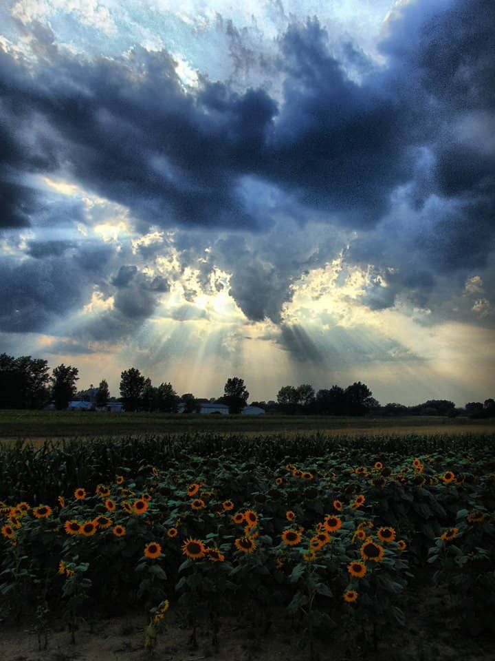 Here is another shot from 2015 August, sonflowers and cloudy sky in Hungary, Felsődobsza