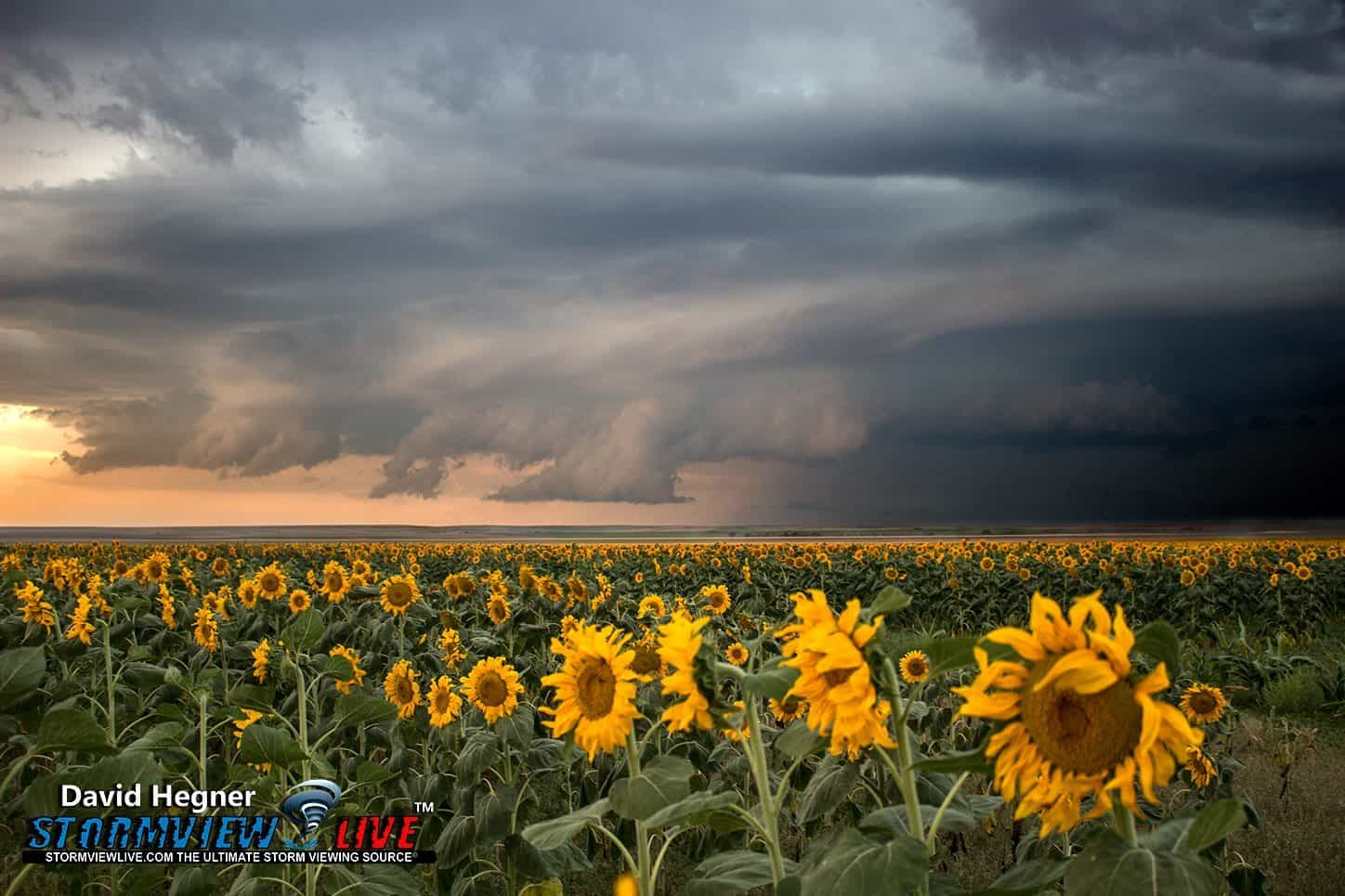 On August 18th of last year I chased a relatively marginal setup in Colorado, that started out with a storm blowing up on a boundary line and quickly going tornado warned. This was the last relevant storm of the day and once I came across this sunflower field I decided I'd end my chase with some still photography and time lapse.