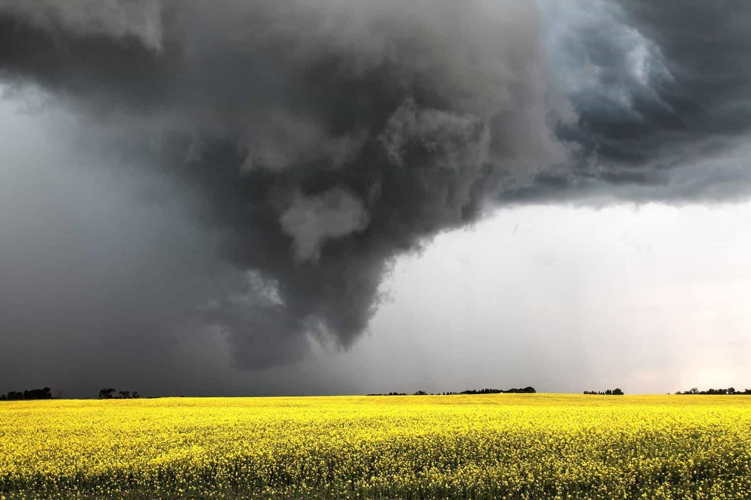 Favorite part of summer storms in Canada is the Canola Storm contrast. Another prairie beast