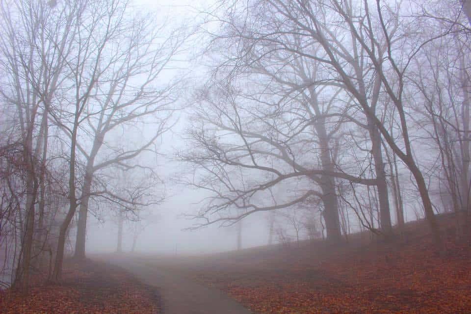 Foggy Morning in Battle Creek, MI.