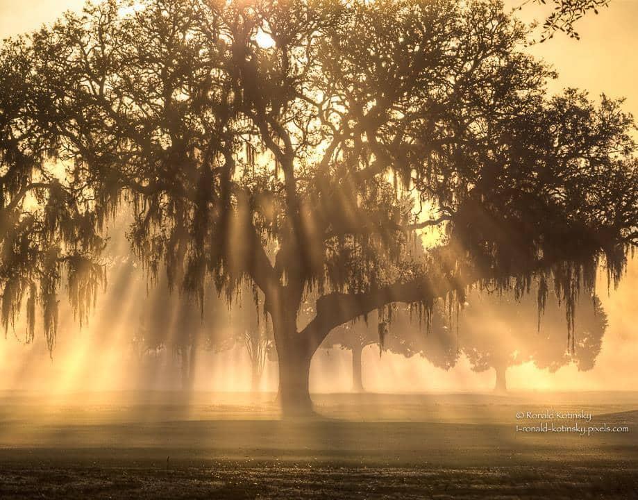 Morning Light - February 2017 - Florida — in Valrico, Florida.