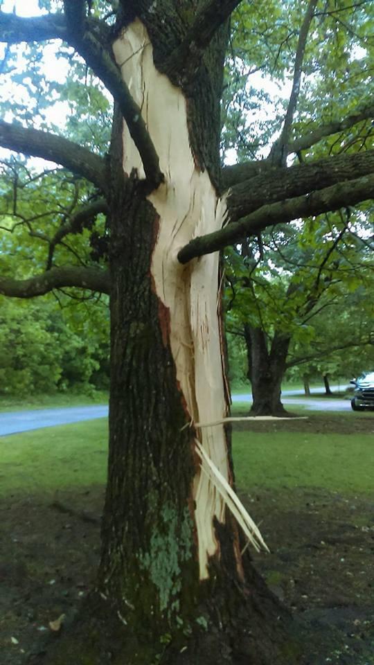 Lighting hit this tree in our yard this morning. Taken in Siloam Springs, Arkansas