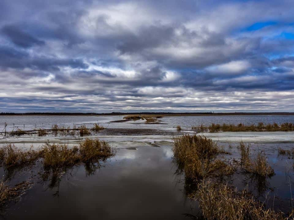 Flooded Terrain  Shiawassee National Wildlife Refuge Saginaw, Michigan 2018