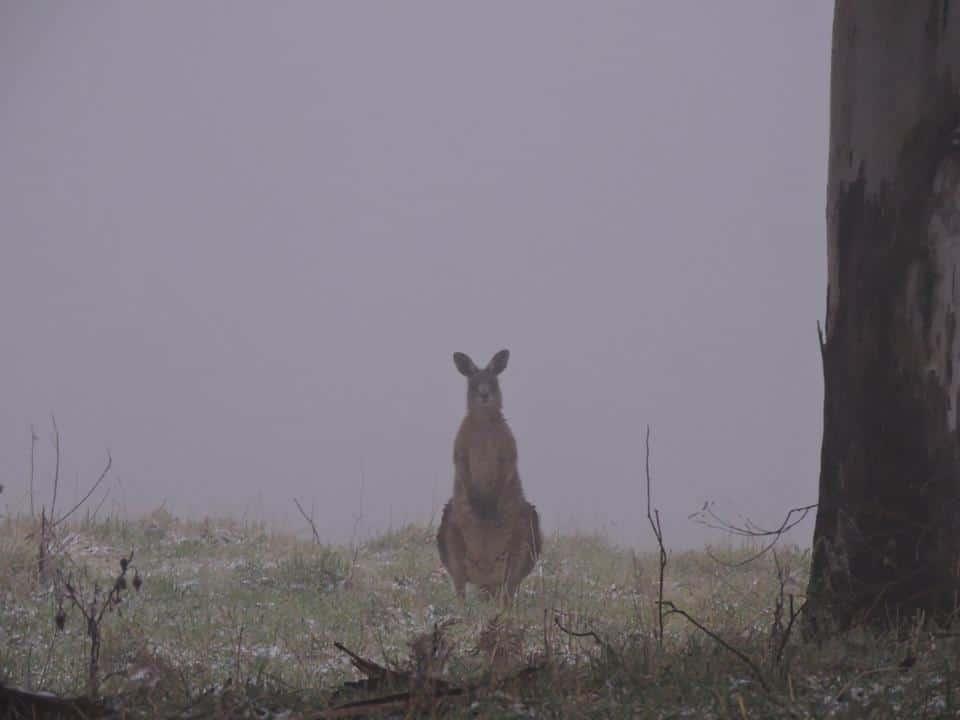 Fog & snow Australian style.