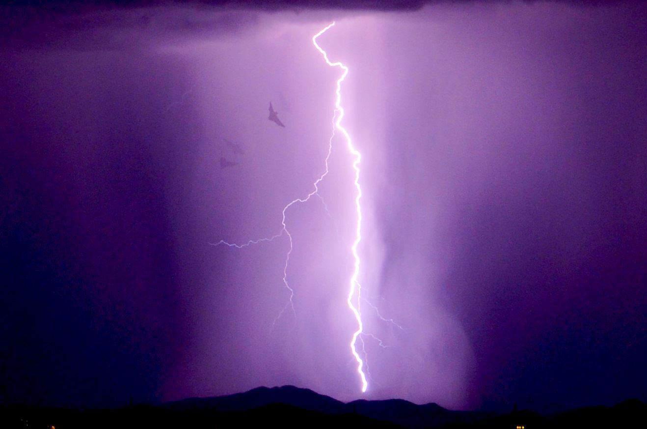 Lightning shooters point AZ. Got photo bombed by a bat.