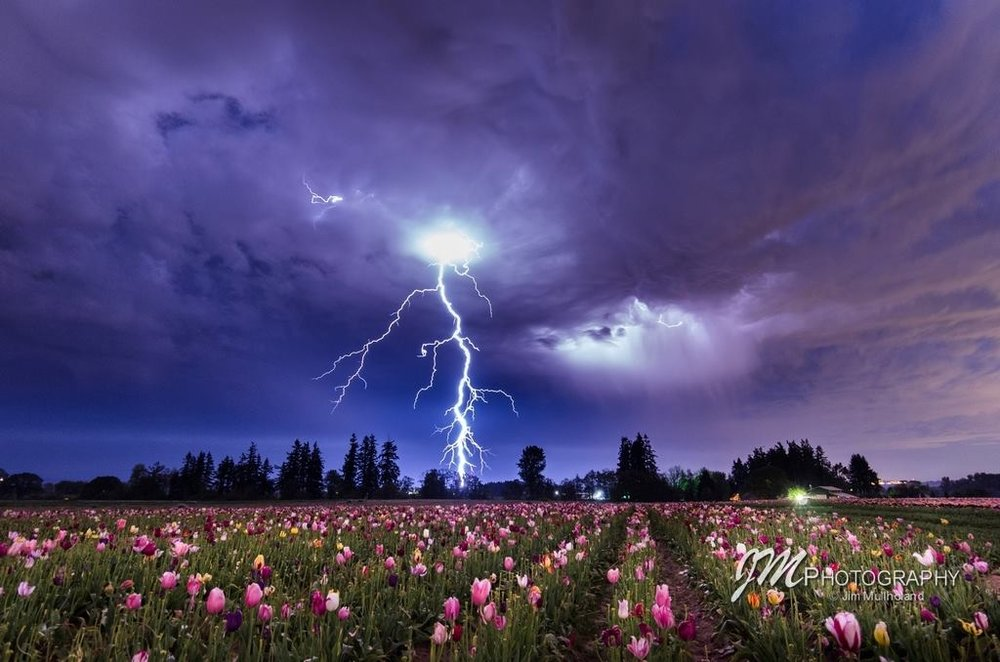 Last Saturday night at the Wooden Shoe Tulip Farm near Woodburn Oregon. We don't get much lightning here in NW Oregon and when we do its usually during the day. This one was awesome since I just happened to be at the Tulip Farm getting ready to do some light painting. Some storms popped up unexpectedly. In the middle of a test shot this bolt of lightning struck and I was lucky enough to capture it. Feel free to share this.