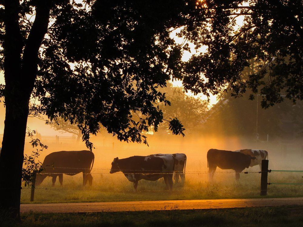 Nice sunrise with fog this morning. Netherlands.