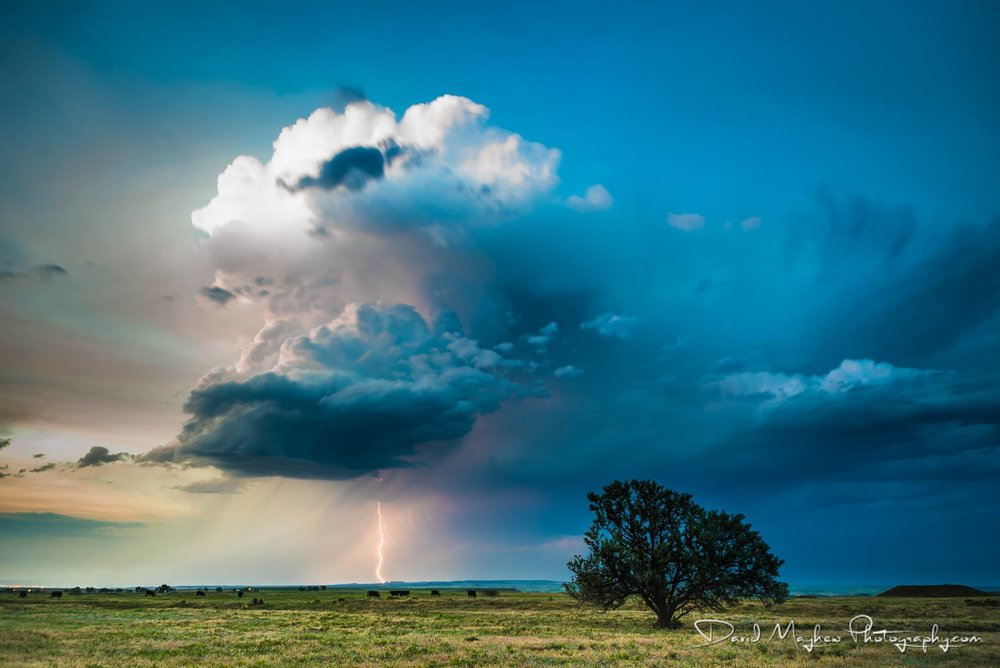 Not a great chase yesterday in Wyoming, but had to make the most of fading chase opportunities for 2018. None-the-less I won't say no to storm structure at sunset, lightning, a tree and a field of cows!