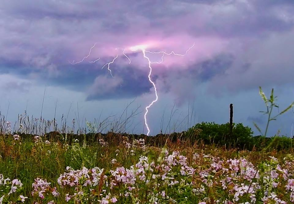 Pink lightning and pink wildflowers compliment each other in a beautifully peaceful scene near Morocco, IN last Thursday.