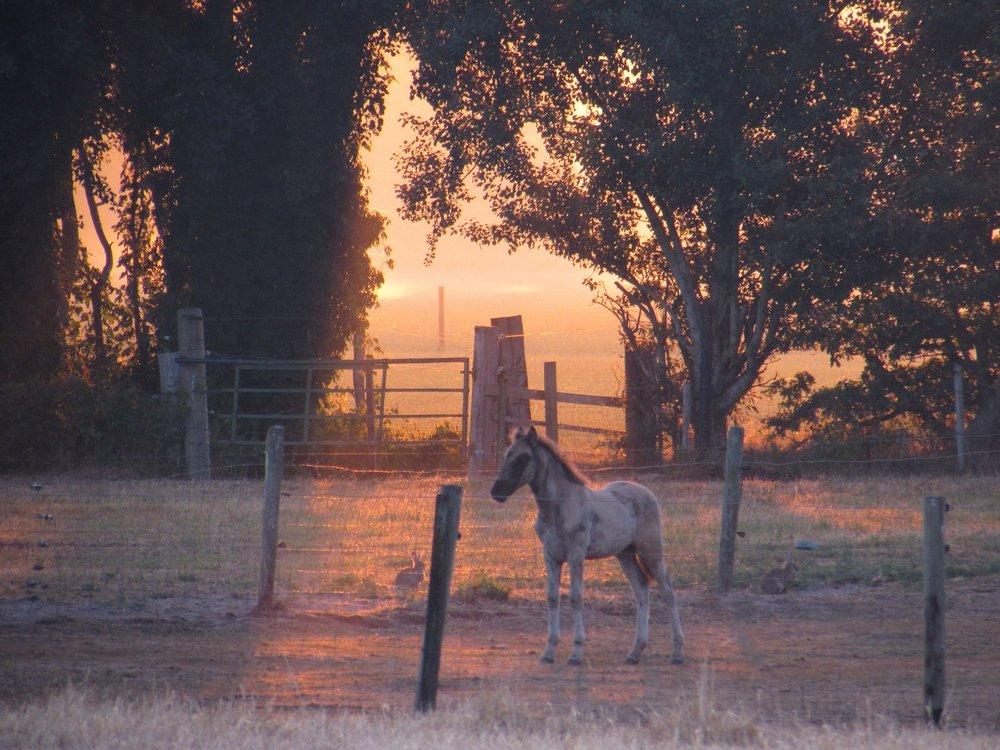 Sunrise Netherlands this morning.
