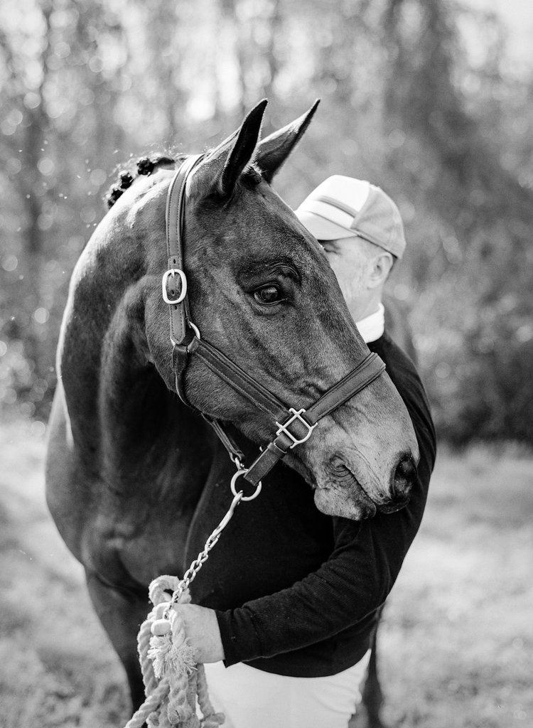 editorial-photo-horse.jpg