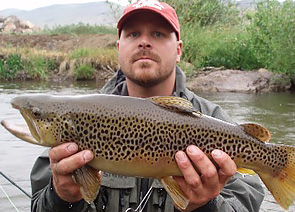 brown-trout-caught-in-colroado-river.jpg