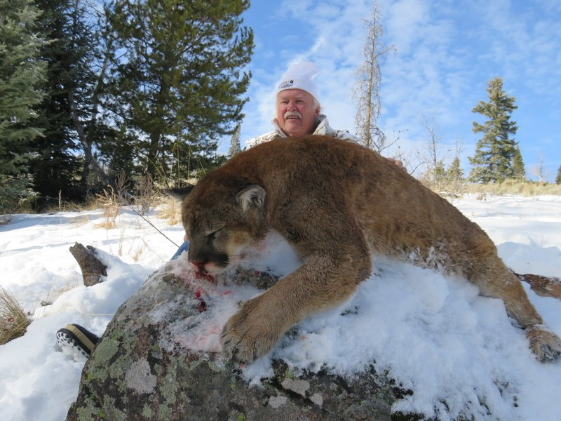 Jeff Solberg Lion A.JPG