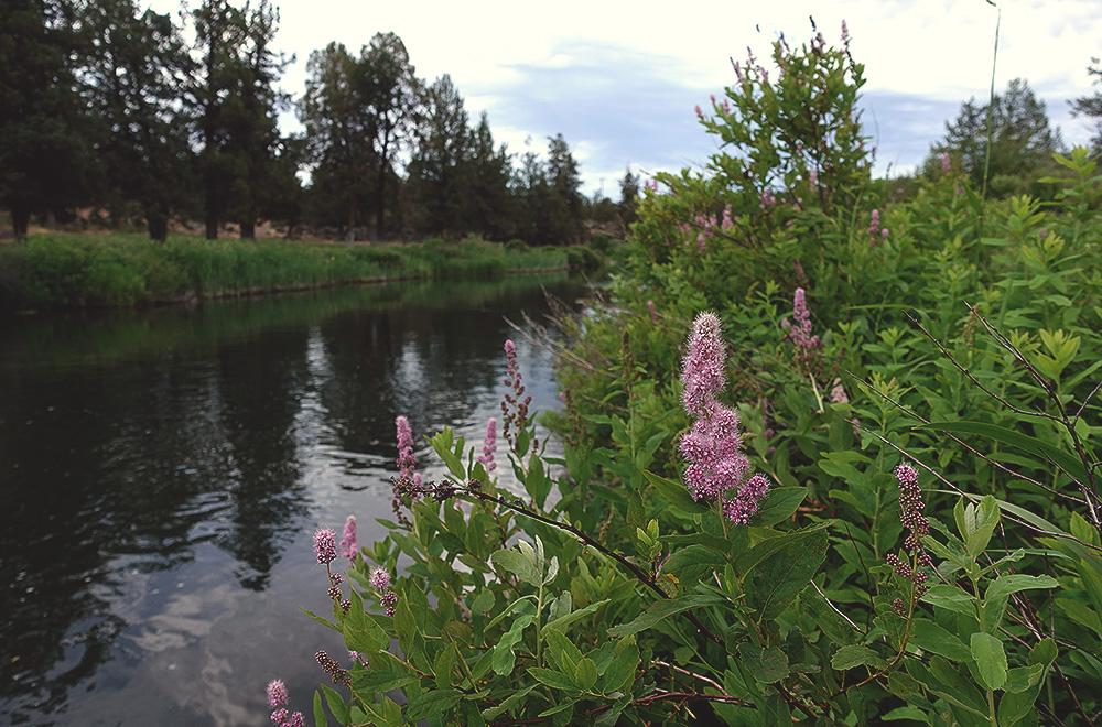 deschutes-river-ranch-9-river-flowers.jpg