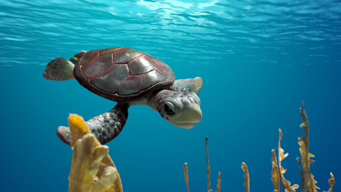 A-sea-turtle-story_57541_LG.jpg