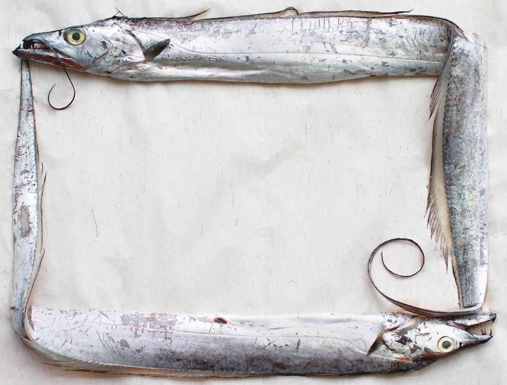 Inspection-fish.jpg