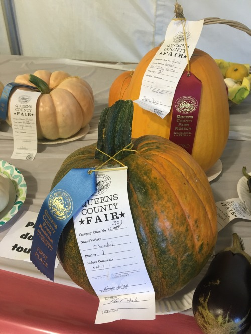 Prize winning pumpkins at the Queens County Fair