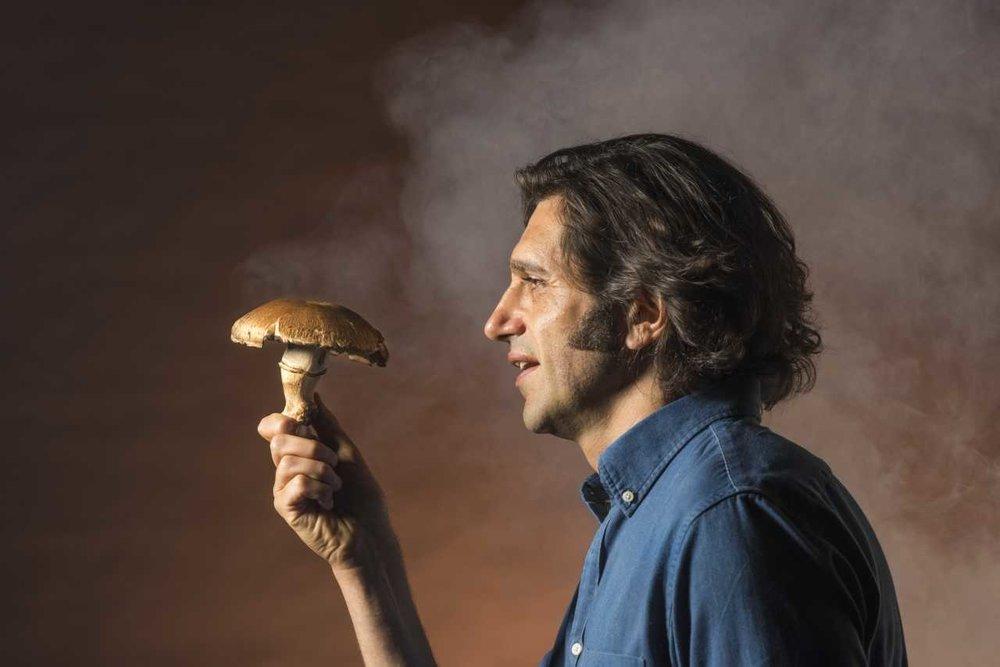 mushroomcure.jpg