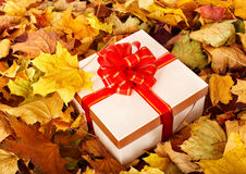 gift-box-fall-foliage-21129957.jpg
