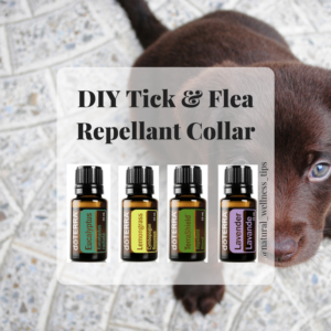 DIY-Tick-Flea-Repellant-Collar-1-300x300.png