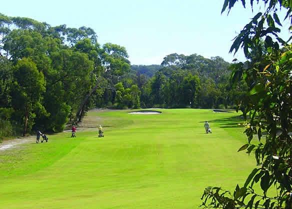 Golf 2 2.jpg