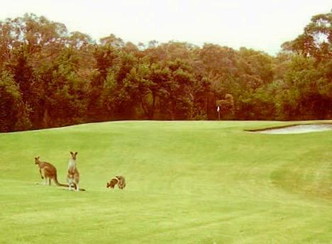 Golf 5 2.jpg