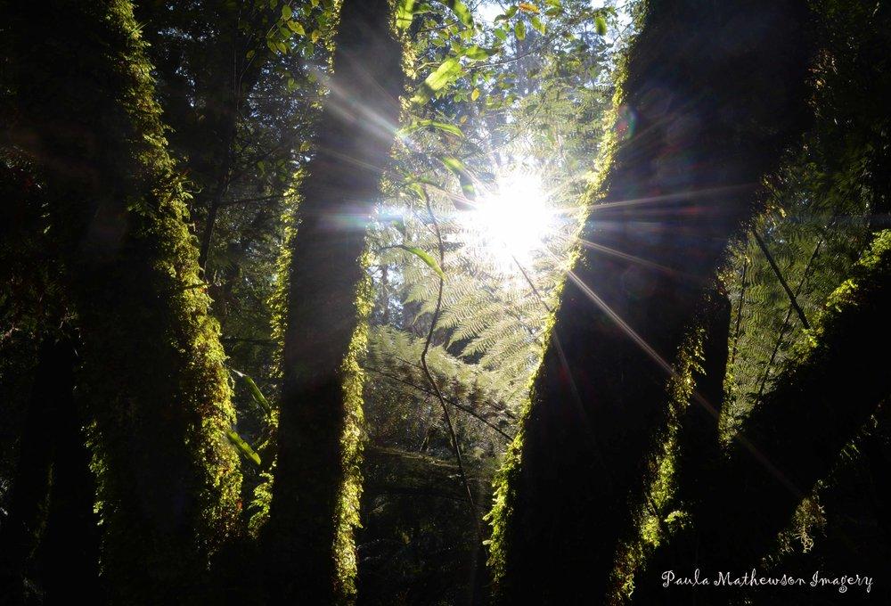 Tarra Valley shine web.jpg