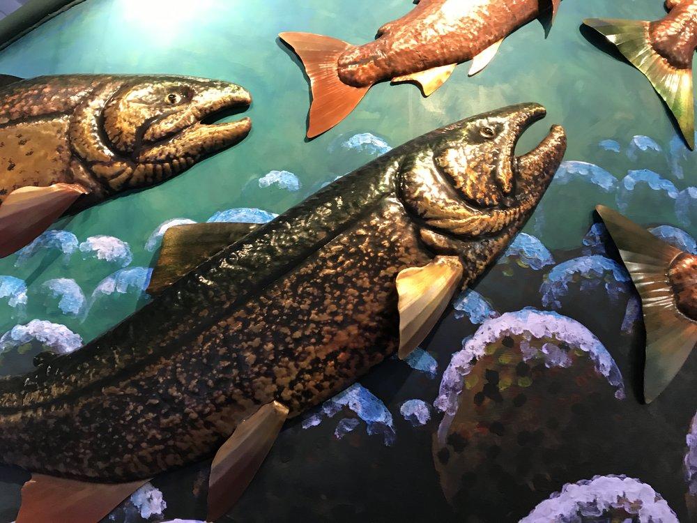 fish close1.jpg