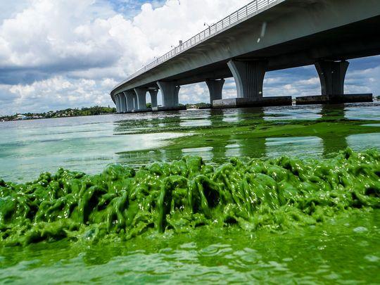 636036753976990443-Algae-bloom.jpg