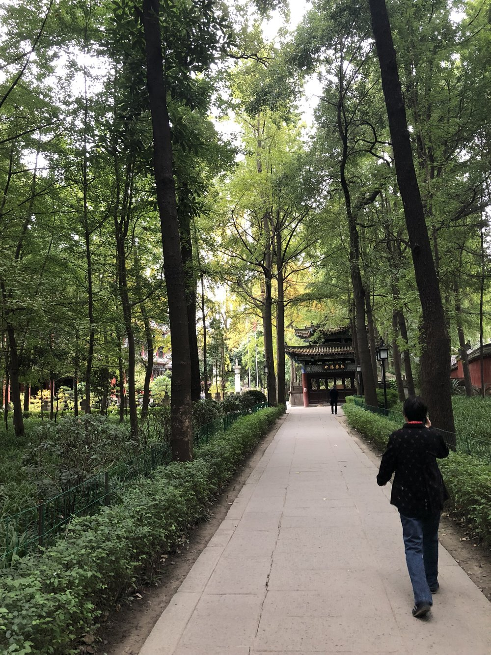 Gardens at Wenshu Temple, Chengdu