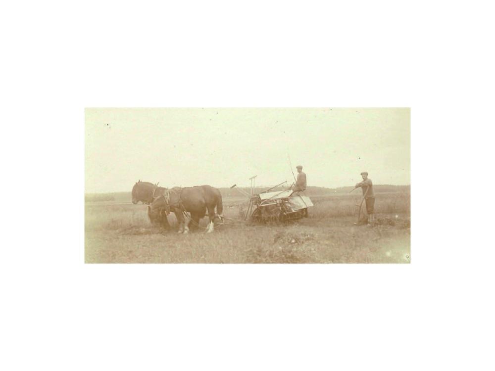 Skörd med sidoavläggare 1912.
