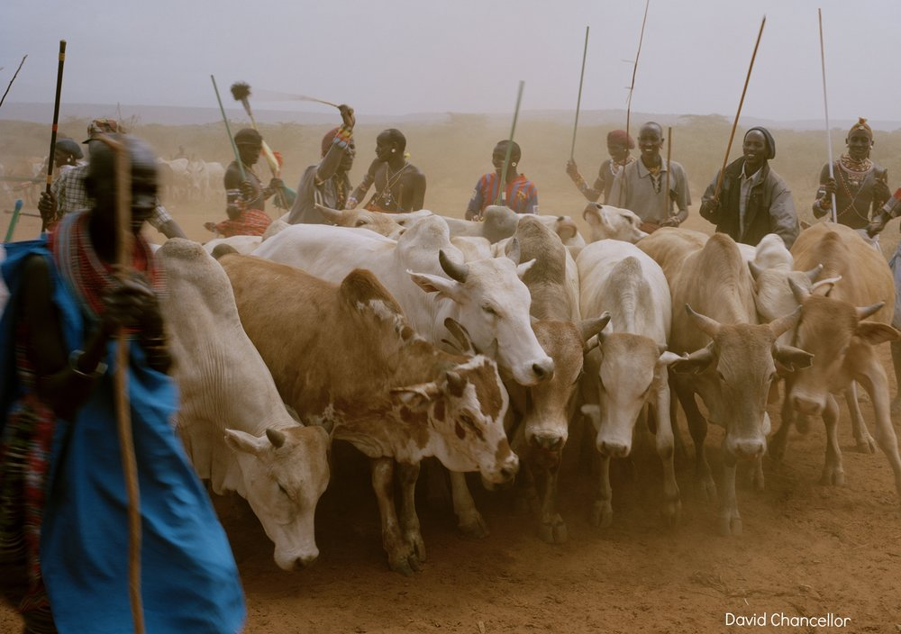 DC 027.41 001 untitled # I, cattle market, meibae community conservancy, nothern kenya-from the series 'with butterflies and warriors'-David Chancellor:INSTITUTE.jpg