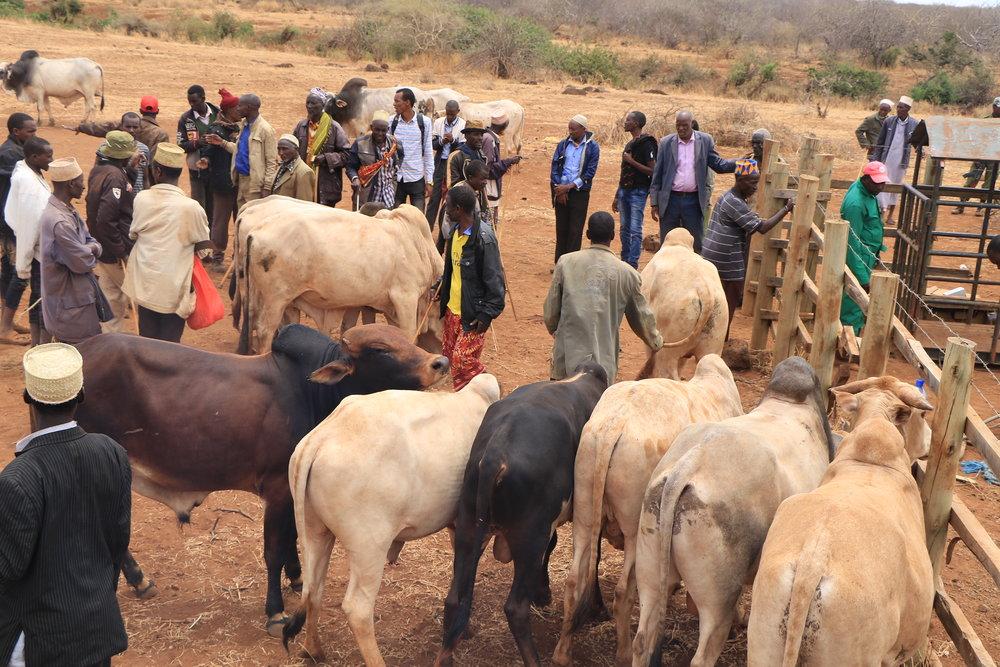 Market day begins - Jaldesa Community Conservancy. Photo: Duncan Ndotono, NRT.