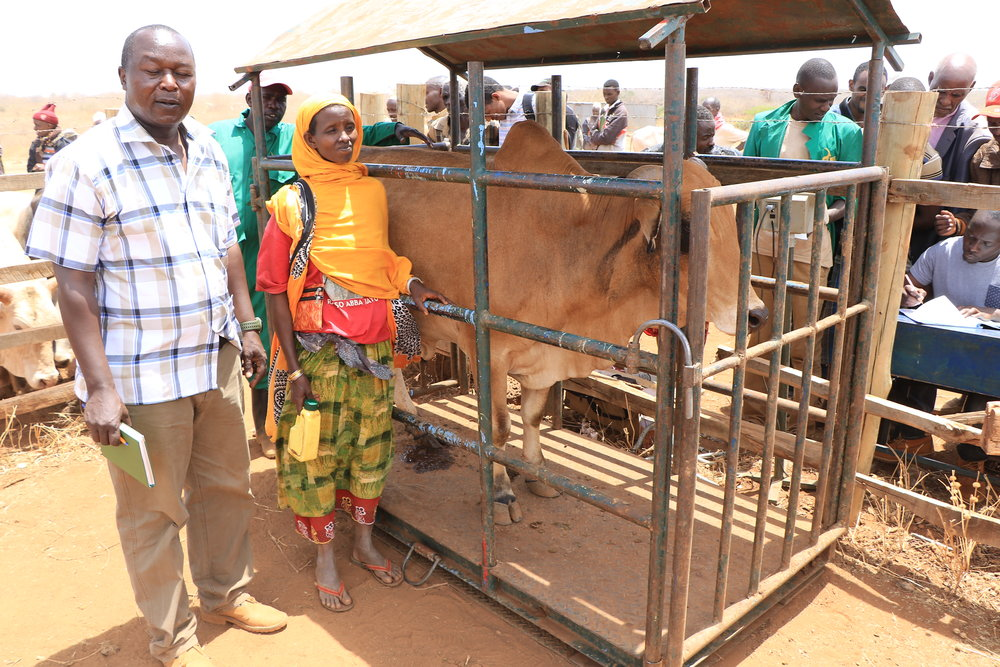 6. Patrick Ekodere with Tume Halake with one of her bulls at the weighing scale (4).JPG