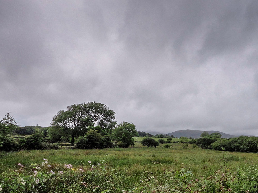 hyde-and-hyde-CHP-petrichor-house-landscape.jpg