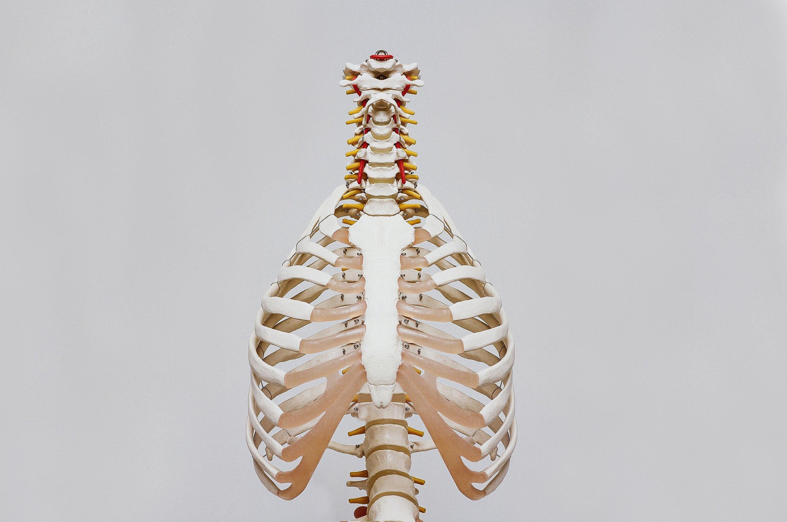 gesunde360grad-menschliche körper