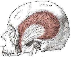 brain illust.jpg