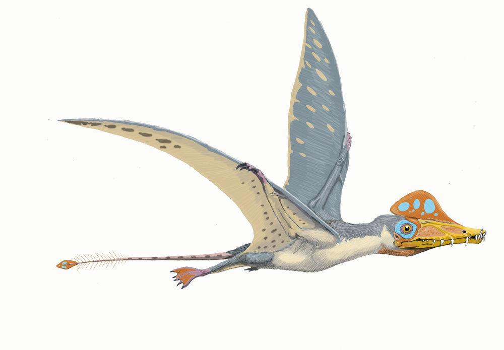 pterosaur.jpg