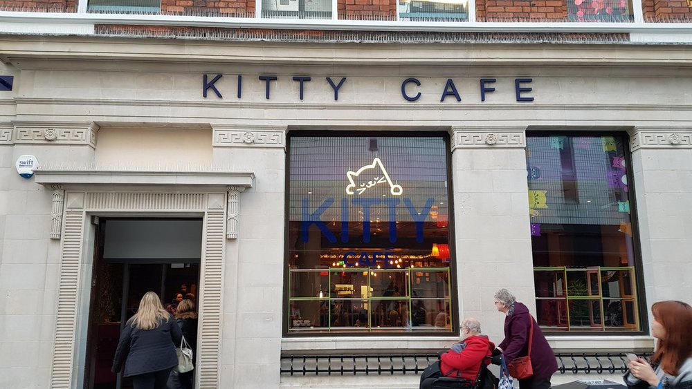 kitty cafe.jpg
